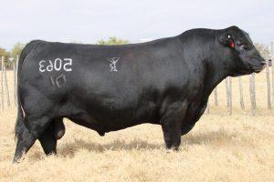 Bar R Jet Black 5063